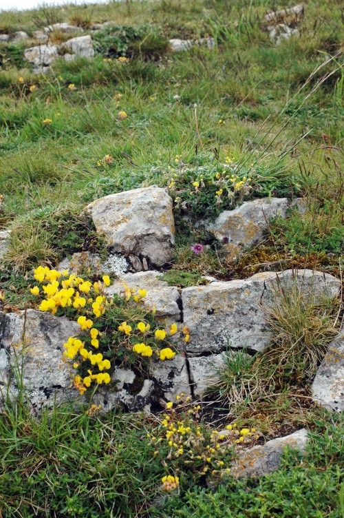 A natural rockery