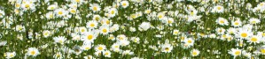 150610-Bodnant Garden 4