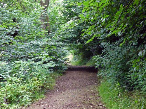 160805-Bryn Euryn (16)-Woodland trail