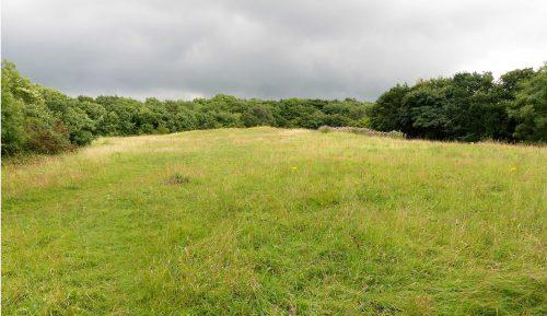 160805-Bryn Euryn (27)-Adder's field