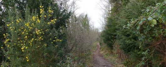 170111-berc006-walk-woodland-trail